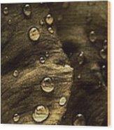 Brown Drops Of Rain Wood Print