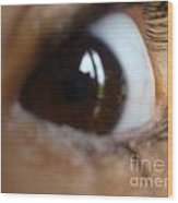 Brown Eyed Girl Wood Print
