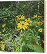 Brown-eyed Susan In The Woods Wood Print by Gary Eason