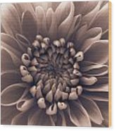 Brown Flower Wood Print