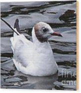Brown-headed Gull Wood Print