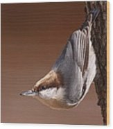 Brown-headed Nuthatch - Little Nutty Wood Print
