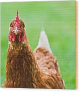 Brown Hen On A Lawn Wood Print