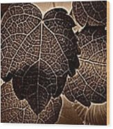 Brown Ivy Wood Print