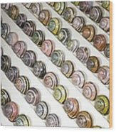 Brown-lipped Snail Colour Variants Wood Print
