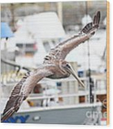 Brown Pelican . 7d8228 Wood Print by Wingsdomain Art and Photography