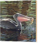 Brown Pelican Afloat Wood Print