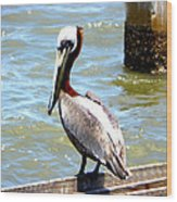 Brown Pelican And Blue Seas Wood Print