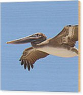 Brown Pelican In High Flight Wood Print