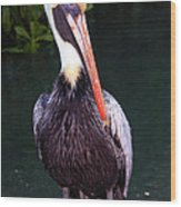 Brown Pelican Islamorada Wood Print