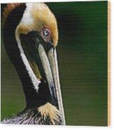 Brown Pelican Profile Wood Print