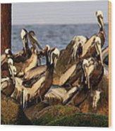 Brown Pelicans - Beauty Of Sand Island Wood Print