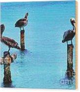 Brown Pelicans In Aruba Wood Print by Thomas R Fletcher
