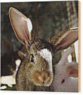 Brown Rabbit Wood Print