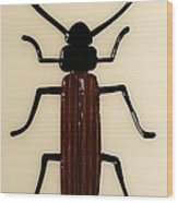 Brown Spruce Longhorn Beetle Wood Print