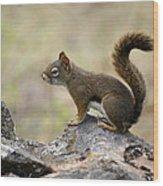 Brown Squirrel In Spokane Wood Print