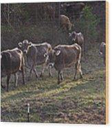 Brown Swiss Cows Coming Home Wood Print