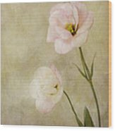 Brushed Pink Lisianthus Wood Print