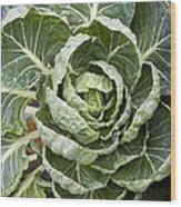Brussels Sprout Plant Wood Print