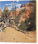 Bryce Canyon Forest Wood Print