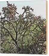 Buchorn Cholla Wood Print