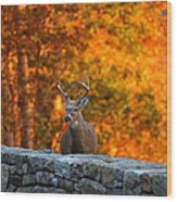 Buck In The Fall 01 Wood Print