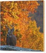 Buck In The Fall 02 Wood Print