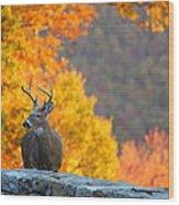 Buck In The Fall 04 Wood Print