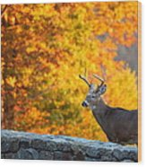 Buck In The Fall 06 Wood Print by Metro DC Photography