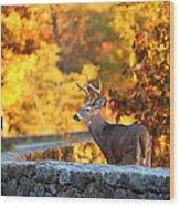 Buck In The Fall 09 Wood Print