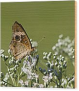 Buckeye Butterfly And Lesser Snakeroot Wildflowers Wood Print