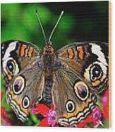 Buckeye Buttterfly Wood Print