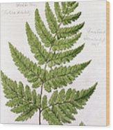 Buckler Fern Wood Print