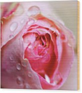 Bud Of Rose Wet Because Of Rain Wood Print by Glittering star. A whisper of trees. The noise of the town.