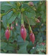 Budding Fuchsia Wood Print
