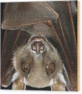 Buettikofers Epauletted Bat Epomops Wood Print