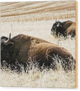 Buff And Friend 2 Wood Print