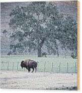 Buffalo And An Oak Tree Wood Print