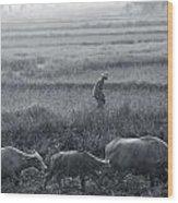 Buffalo And Monsoon Rain Wood Print by Anonymous