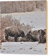 Buffalo Braving The Winter Cold Wood Print