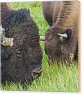 Buffalo Eyes Wood Print