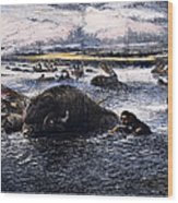 Buffalo Hunt, 1874 Wood Print