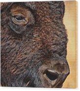 Buffalo Up Close Wood Print