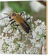 Bug And Flowers Wood Print