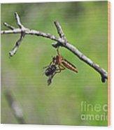 Bug Eat Bug Wood Print
