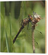 Bug Eyed Dragon Fly Wood Print