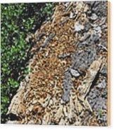 Bug Filled Bear Clawed Log Wood Print
