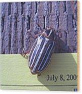 Bug Lands On My Paper Wood Print
