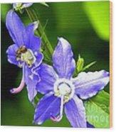 Bug On Blue Wood Print