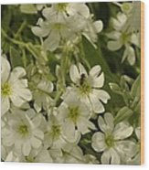 Bug On White Blooms Wood Print